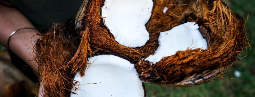 Wie Kokosmilch wirklichentsteht